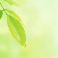 Dicas de Como Cuidar das Suas Plantas