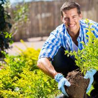 Tudo sobre a Manutenção de Jardins