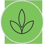 Ficus Pisagismo