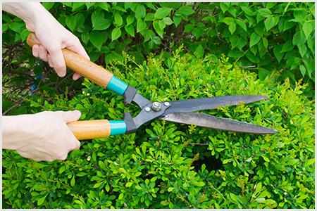 Conheça mais sobre a nossa Manutenção de Jardins