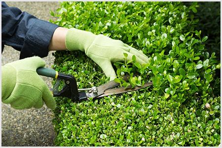Conte com uma manutenção de jardim periódica com os melhores profissionais.